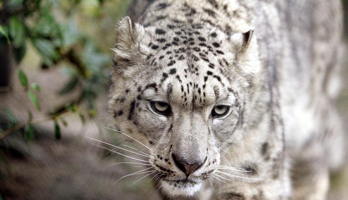 estinzione animale ecco chi e in pericolo