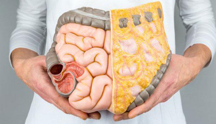 probiotici per il benessere dell organismo